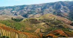 View of the vast vineyards along the Douro River