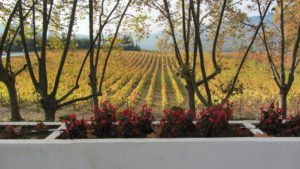 The beauty of fall along the Douro River