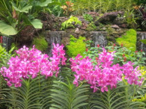 Spectacular orchid gardens