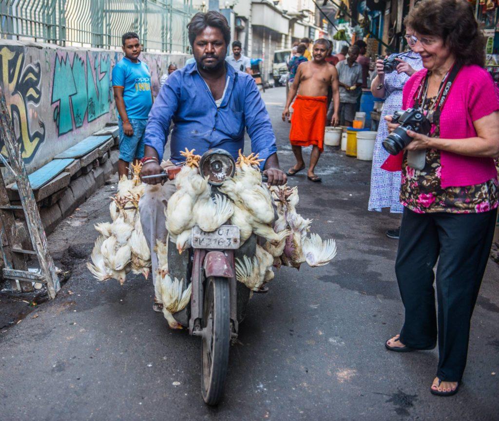 Chickens on the streets of Kolkata, India. Photo: Al Doerksen.
