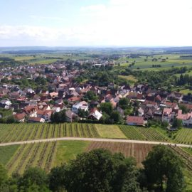 A small part of the view from the top of Steinsberg tower.