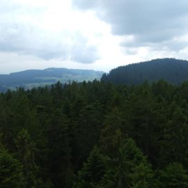 The view from the top of the tower, above the crowns of the tall evergreen trees.